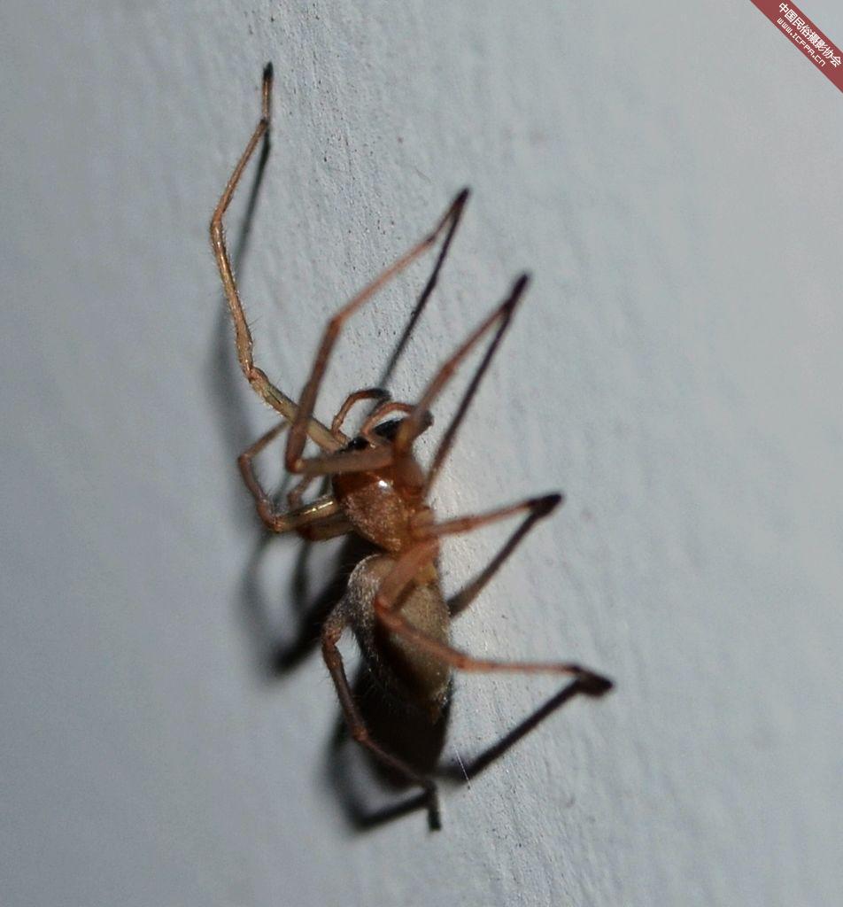 2014吃人蜘蛛图片